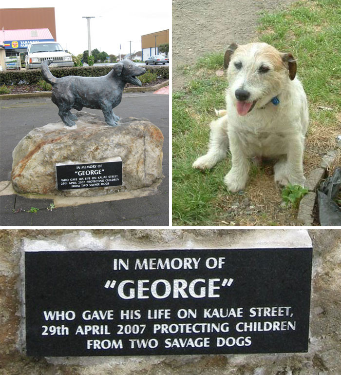 A Jack Russell named George protected 5 children from getting attacked by two Pitbulls in New Zealand