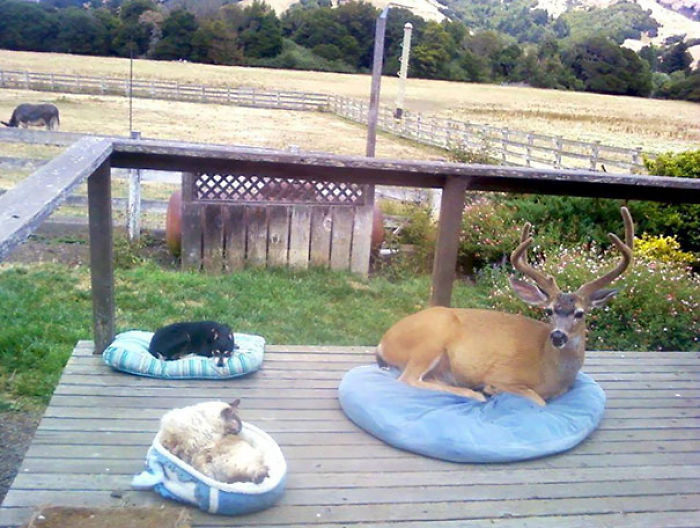 Wonder if anyone's ever considered a pet deer.