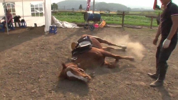 Horse Down!