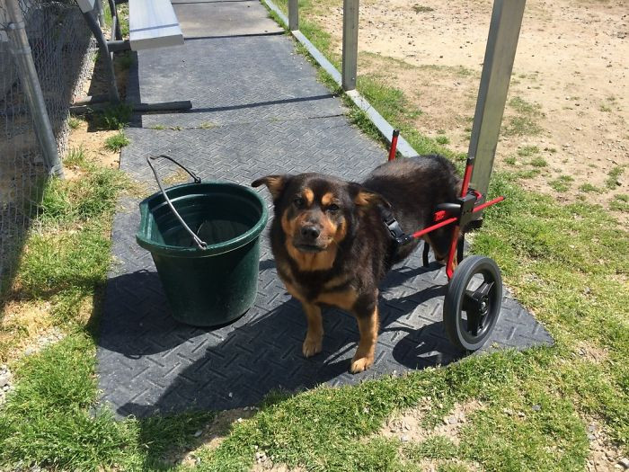"""The most intriguing part of Bandit is that he and I share the same type of paralysis and use a wheelchair to get around,"" Darrell said."