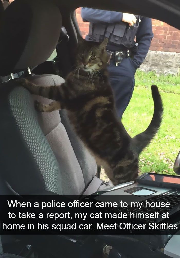 75. Doesn't this make you want to see police cats?