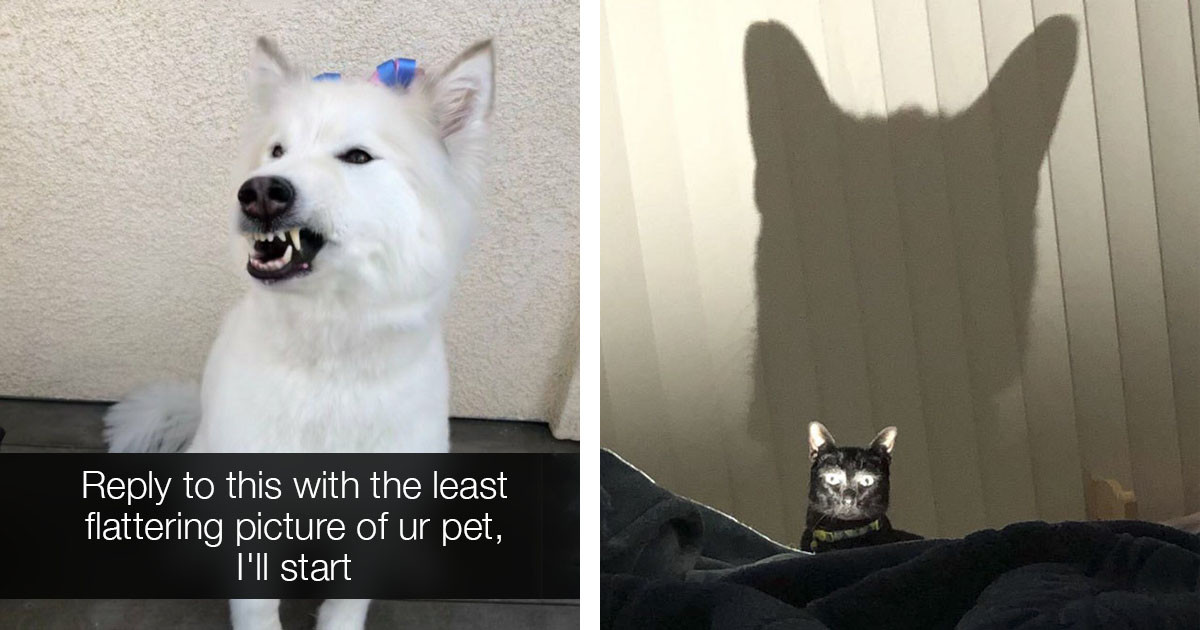 Twitter User Asks For Unflattering Pet Pictures And The Internet Hilariously Delivers