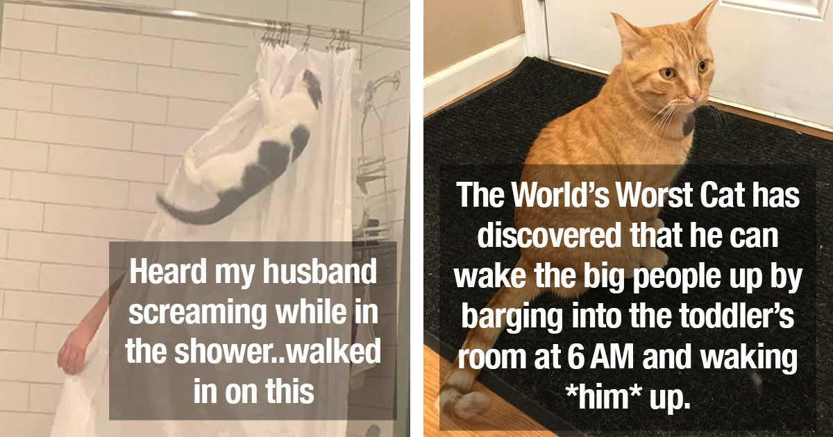 These Cats Are Quite Aware Of The Fact That They're A-Holes, But They Don't Really Care