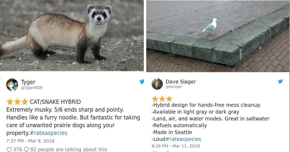 Zoos Rate Their Animals By Giving Them Reviews and The Results Are Hilarious