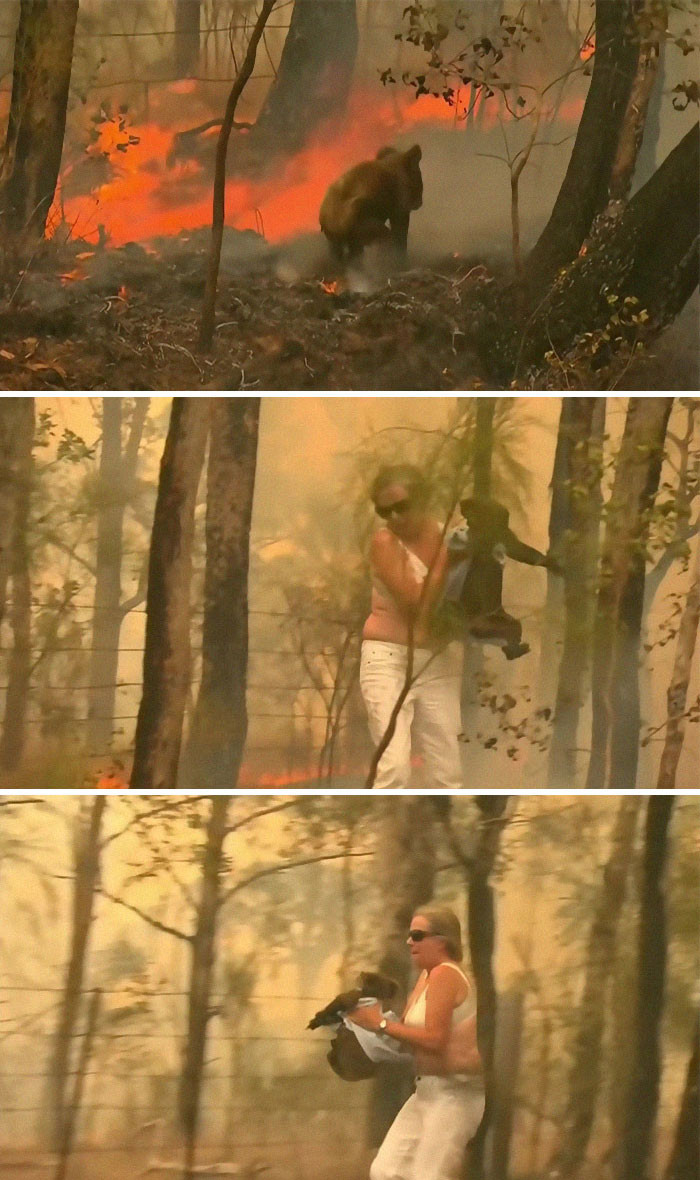 #16 Woman saves koala from the fire