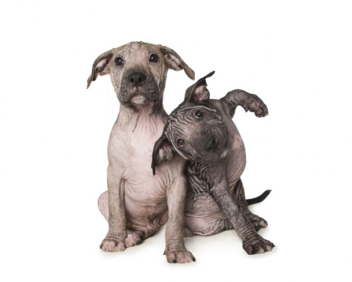#10 Penny's Puppies Who Had Mange