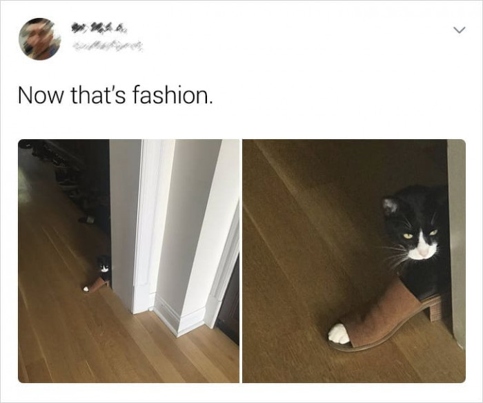 7. Cats should just take over the fashion industry