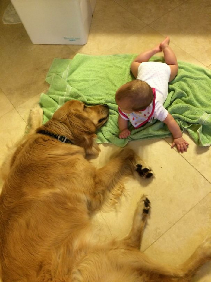 I love how sweet Goldens are.