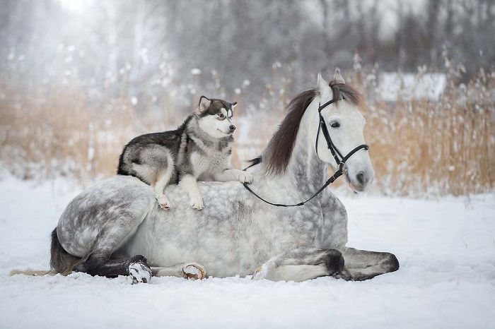 10. Friendship Between A Horse And Husky