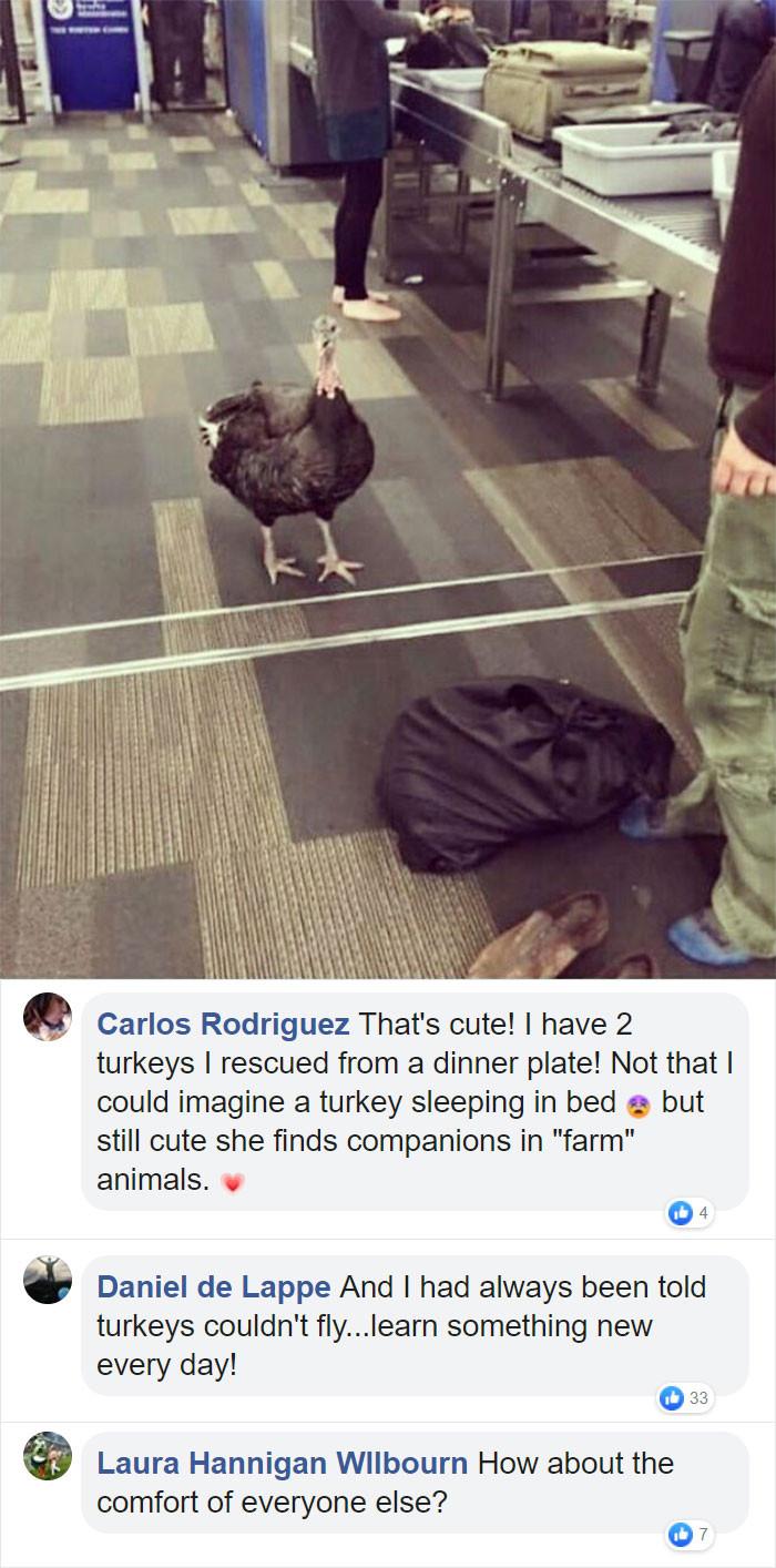 14. Waiting in line like a good Turkey