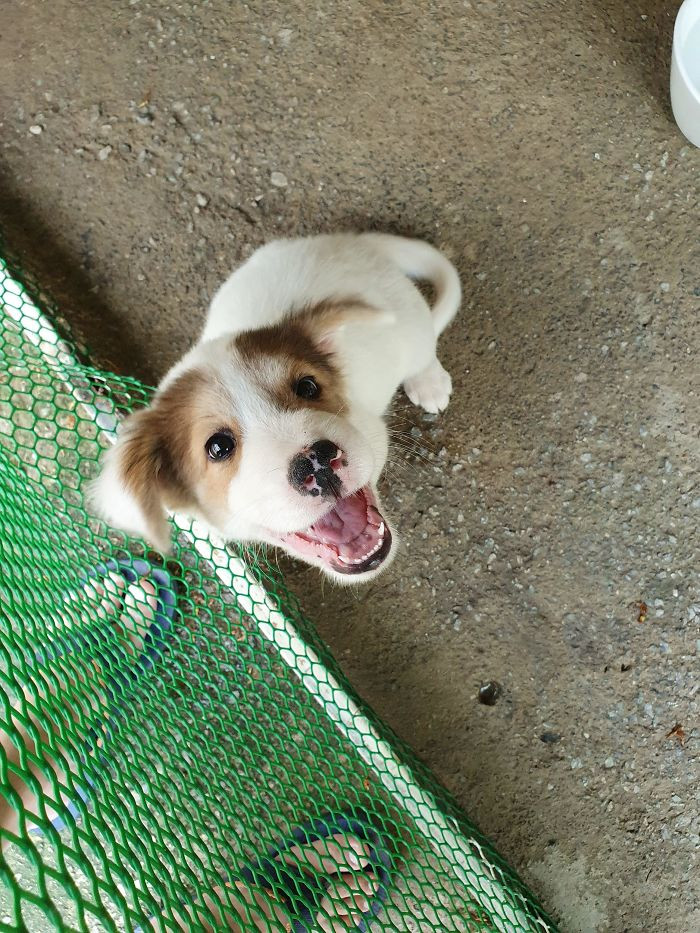 15. Hi Everyone. My Name Is Joey. I Am Excited Because I Am Being Adopted Today