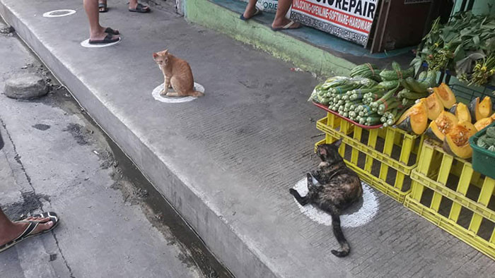The felines stayed inside the markers for about 10 minutes. This band of cats usually comes here searching for food