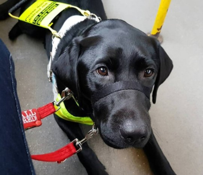 Recently, Megan was on board a bus with her 2-year old black labrador, Rowley.