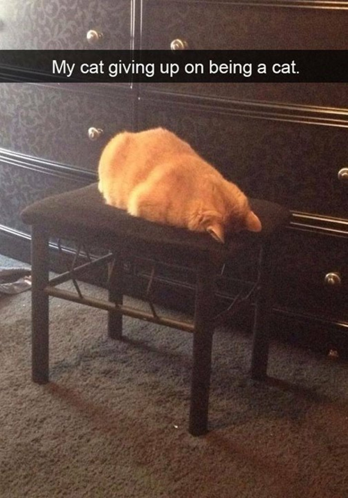 11. When there's not enough catnip or sunbeams...