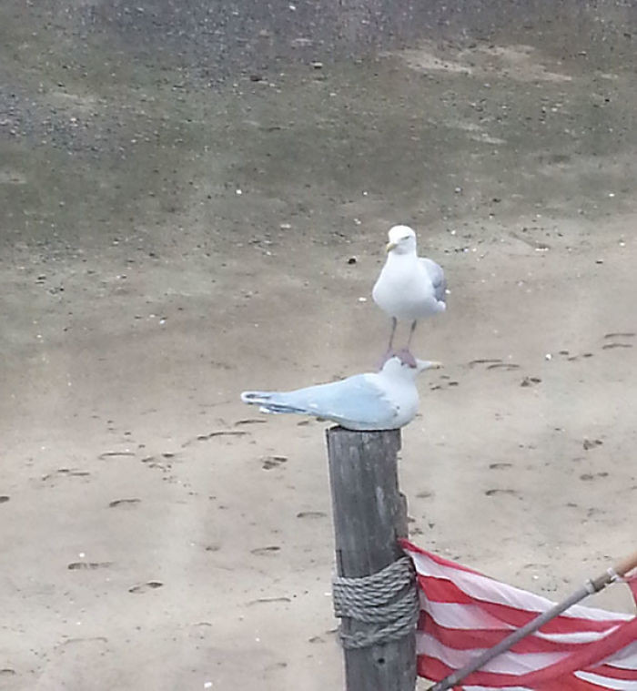 This seagull doesn't care what it's standing on as long as it can stand on top of it.