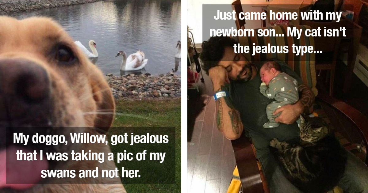 People Share Photos And Videos Of Their Pets Being Jealous