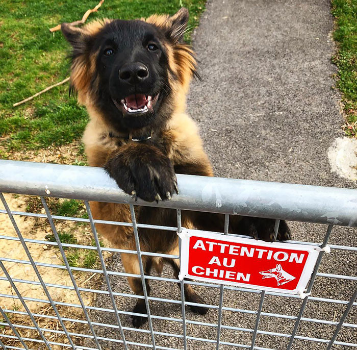 # 19 Beware Of Dog