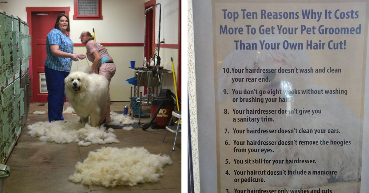 If You've Ever Wondered Why The Groomer Costs More Than The Hairdresser, This Sign Should Explain Everything