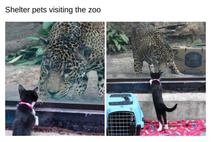 9. A cat is a cat is a cat