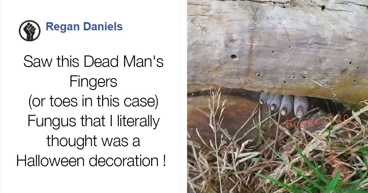 Creepy Fungus Called The 'Dead Man's Fingers' Is Kind Of Disturbing