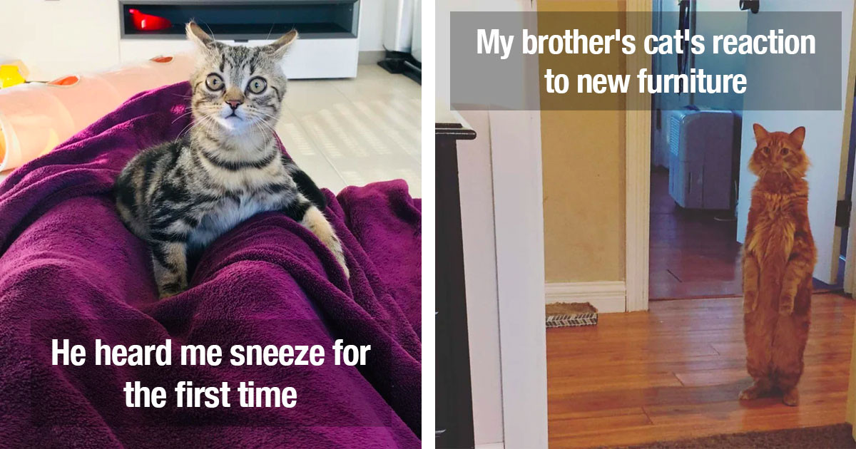 Drama Queen Cats Who Went Over-The-Top
