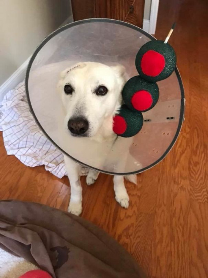 #25 Since He Has To Wear A Cone, My Friend's Dog Is A Martini For Halloween