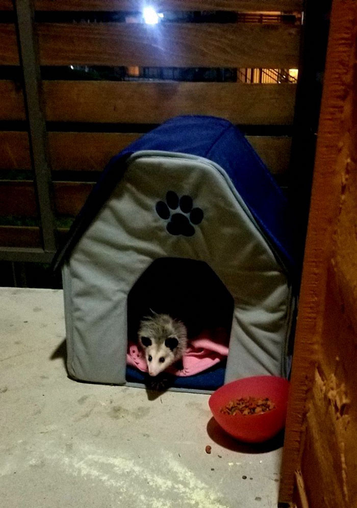 #3 I Have Been Feeding A Cat For Some Time Now. Of Course I Set Out A Little Shelter And Blanket Also. I've Grown To Call Them My Phantom Kitty. I Could Never Catch It During The Day So I Figured I Would Sneak Out To Take A Peek Tonight. Look At This