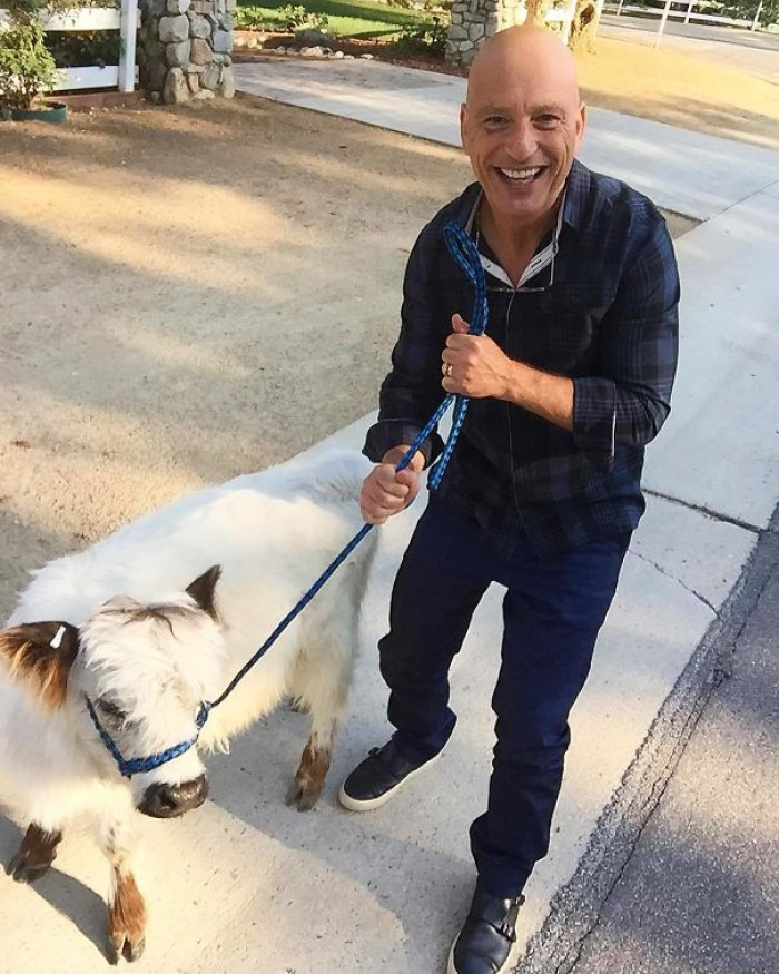 5. Nothin' quite like Howie Mandel and a mini cow.