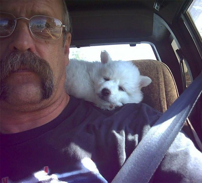 When you adopt a dog...