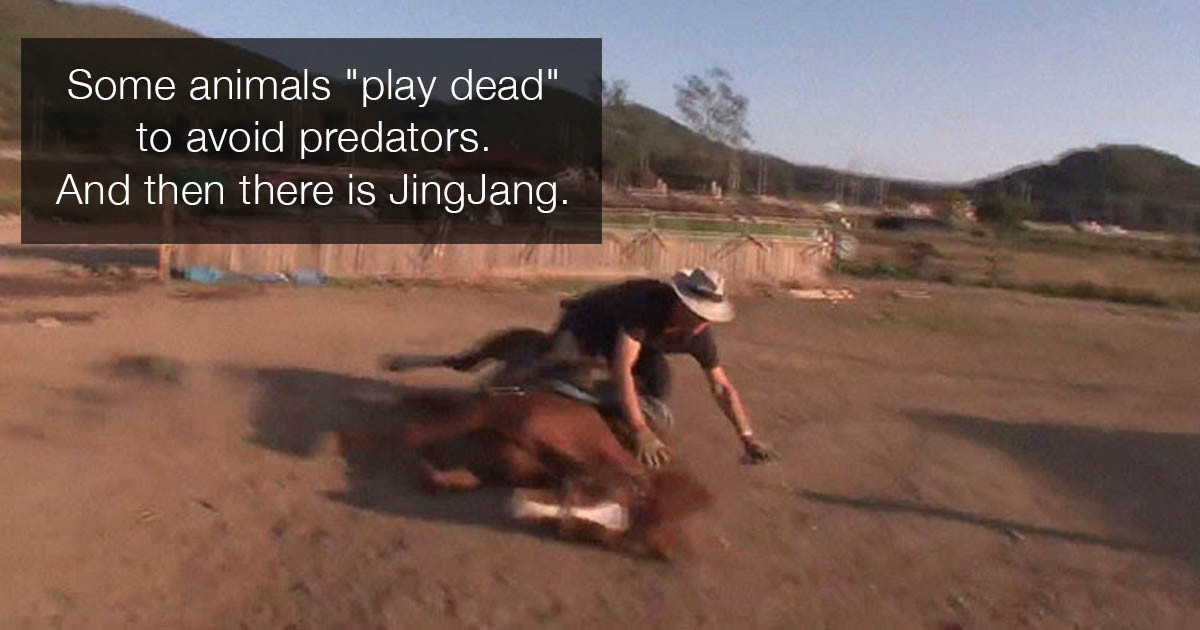 This Overly-Dramatic Horse Pretends To Be Dead Whenever Anyone Tries To Ride Him