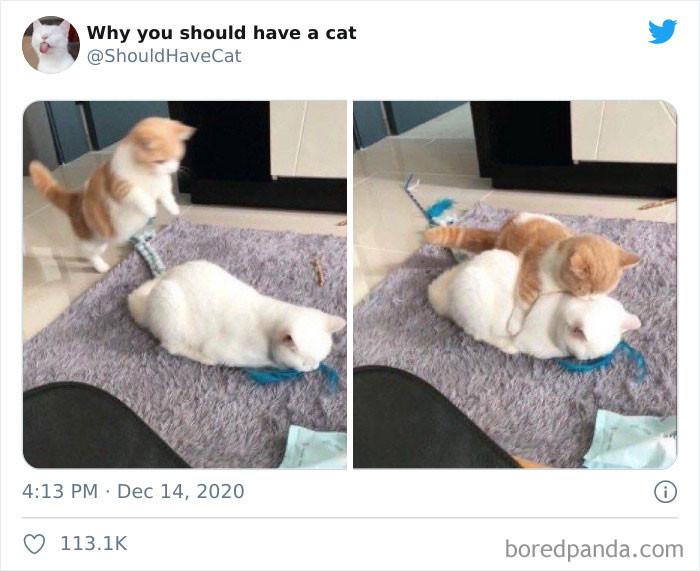 1. Cats go POUNCE