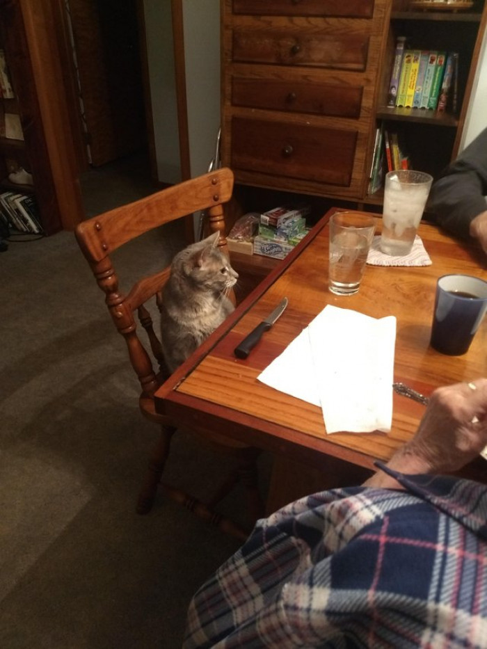 These grandparents who initially didn't want a cat. But now set Lulu a place at the dinner table.