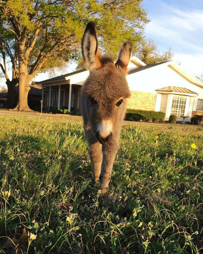 Meet Jack the Donkey