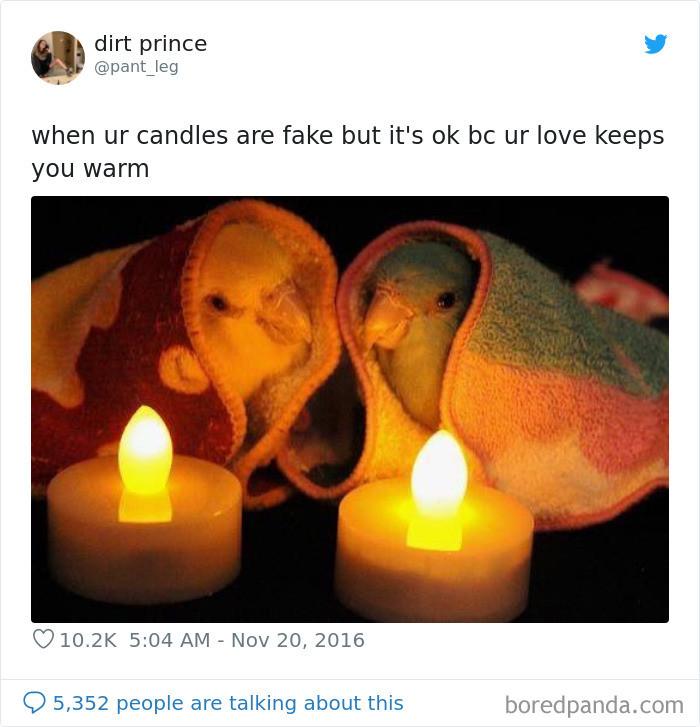 #31 Cozy Blanket Birbs