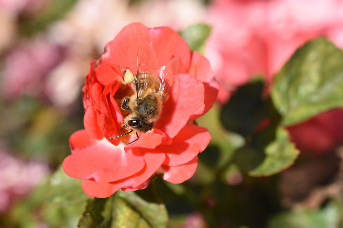 #14 Bees Get Sleepy After Drinking Nectar And Occasionally Take Naps On Flowers