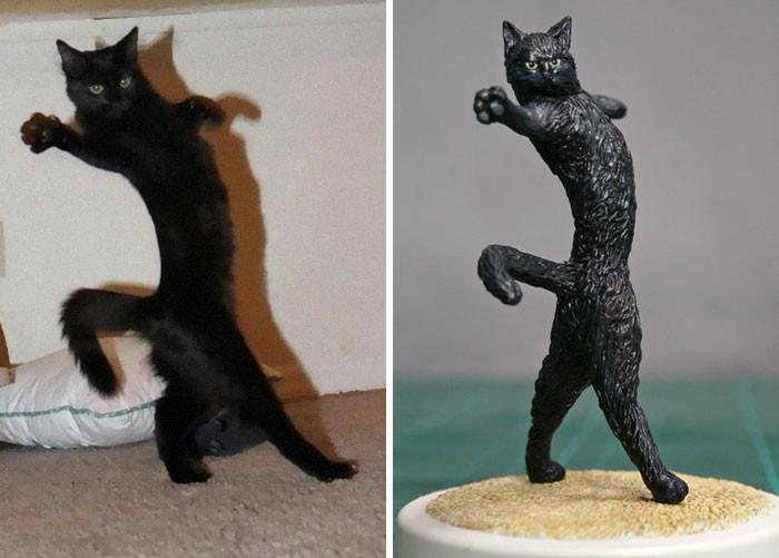 #7 Jazz Cat