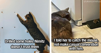 Cat Lovers Know Exactly What Cat Logic Is And Why It's So Funny