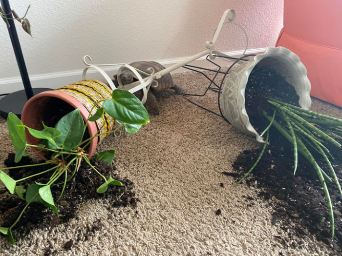 """20. """"Thought the house was being broken into but it was just the tortoise wreaking havoc."""""""