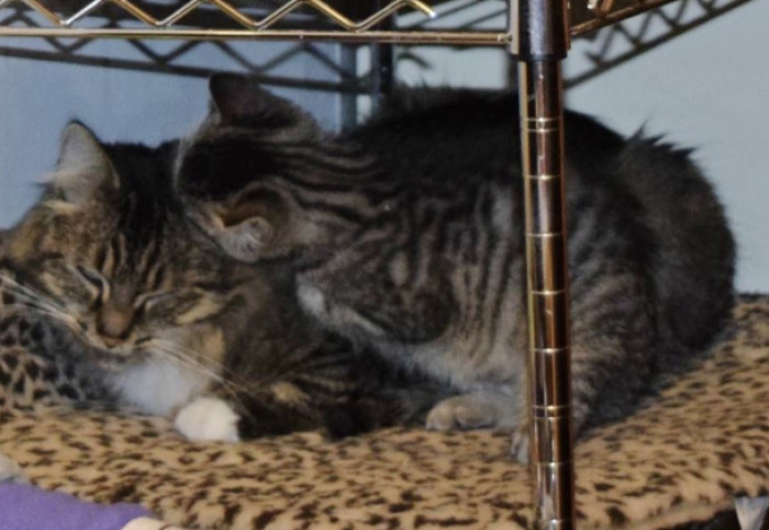 Shelby and Lizzie graduated from their foster home on November 17th, and were ready for their new life.