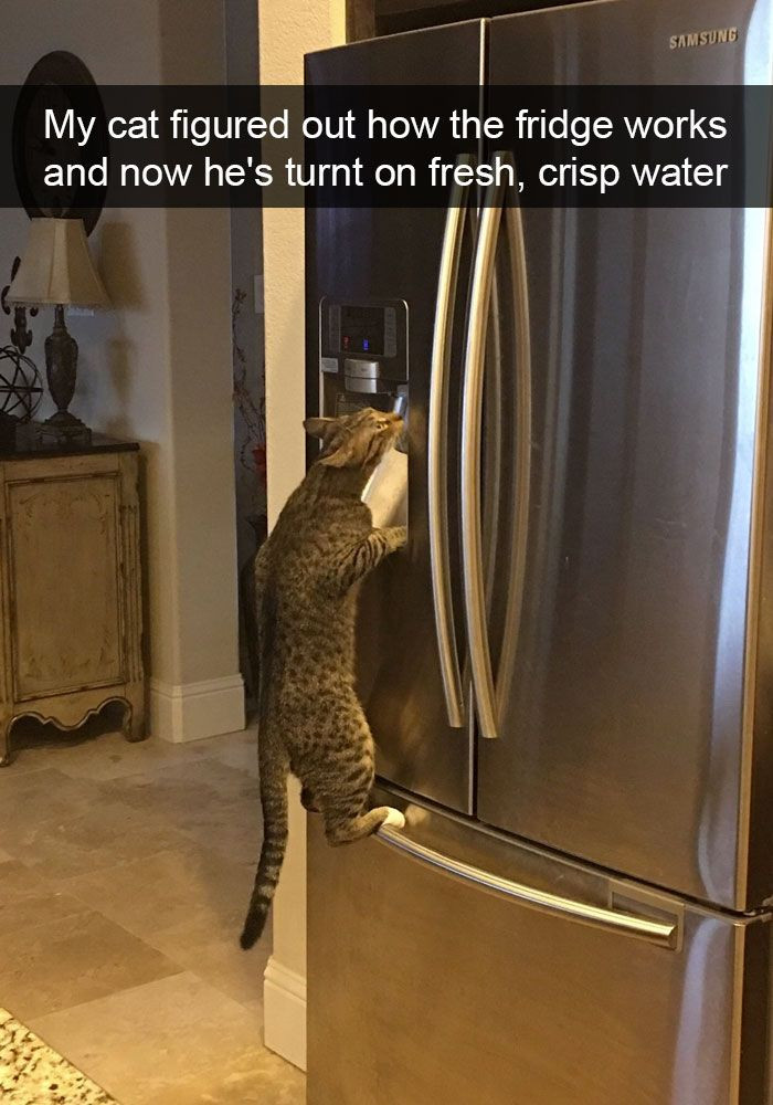 111. Only the freshest water for my kitties.