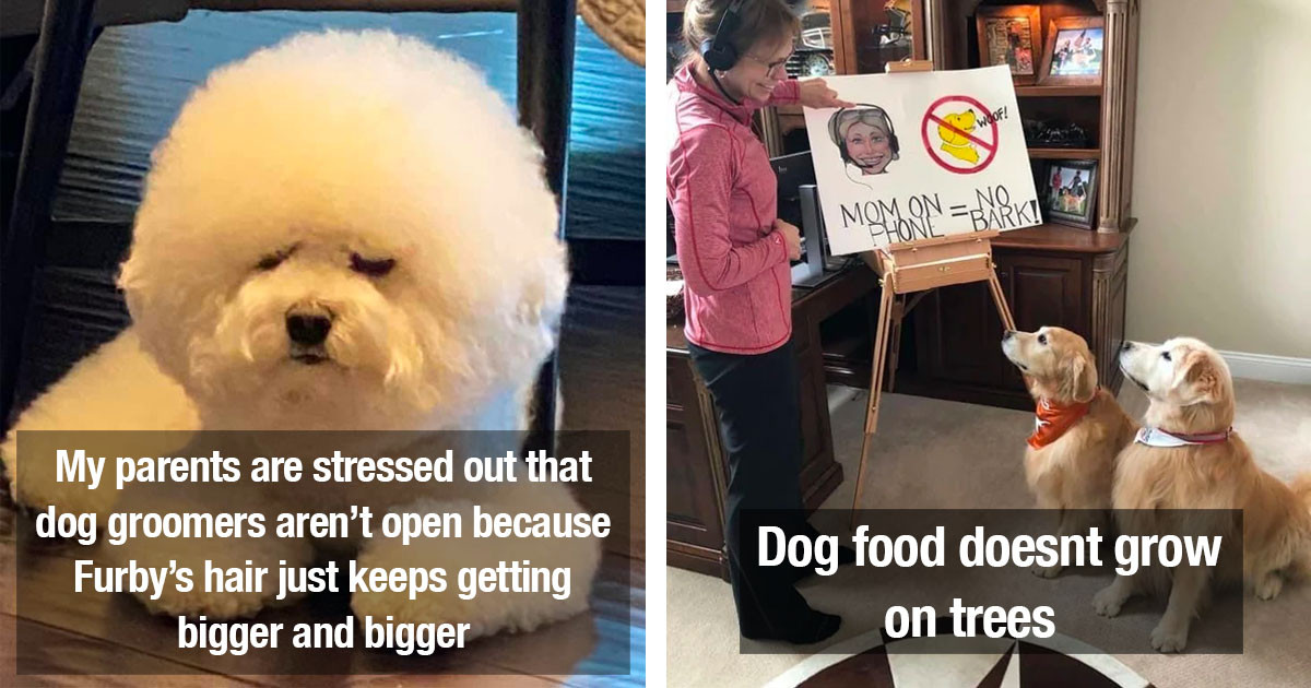 The Very Best Dog Posts Of The Week For Pup Lovers