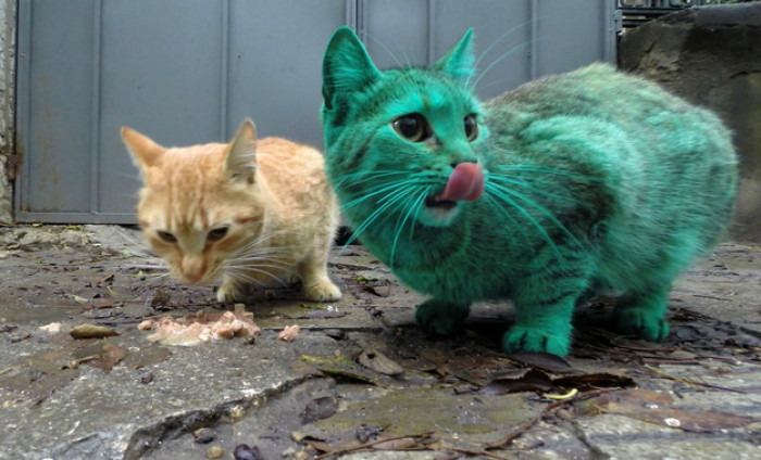 Thankfully, the local police and animal welfare organization determined the cat accidentally dyed itself the shocking green color.