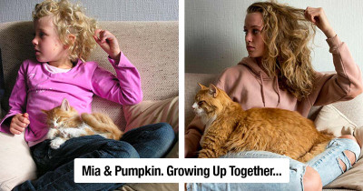 Side By Side Pictures Of Cats When They Were Kittens Are Too Purrfectly Precious
