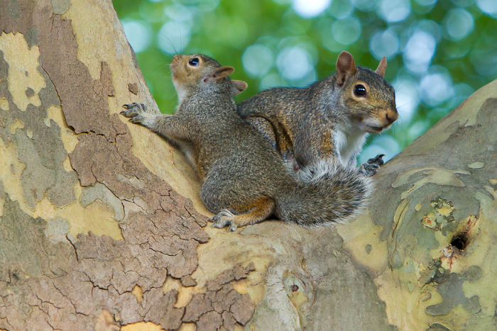 #17 Squirrels Adopt Other Baby Squirrels If They're Orphaned