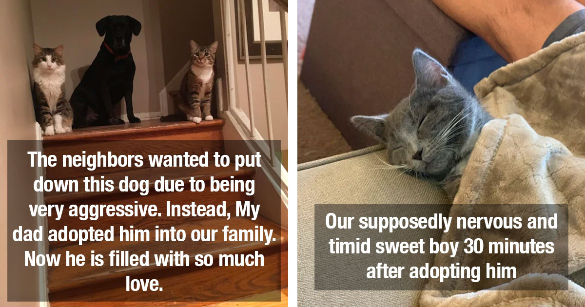 Wholesome Rescue Pet Photos That Will Completely Melt Your Heart