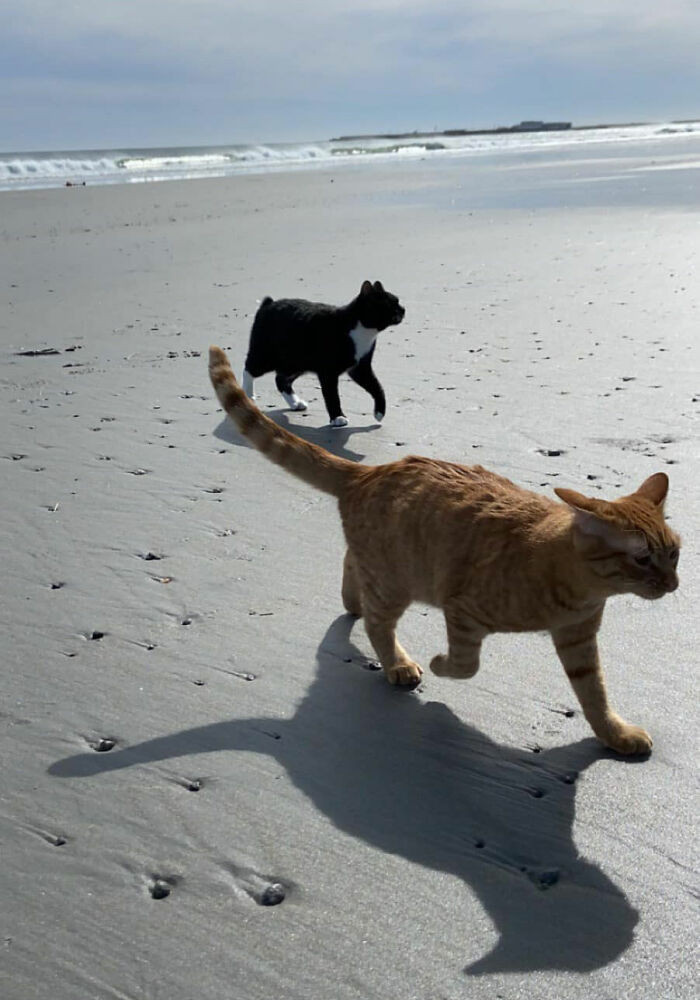At first, Pumpkin liked the beach very much