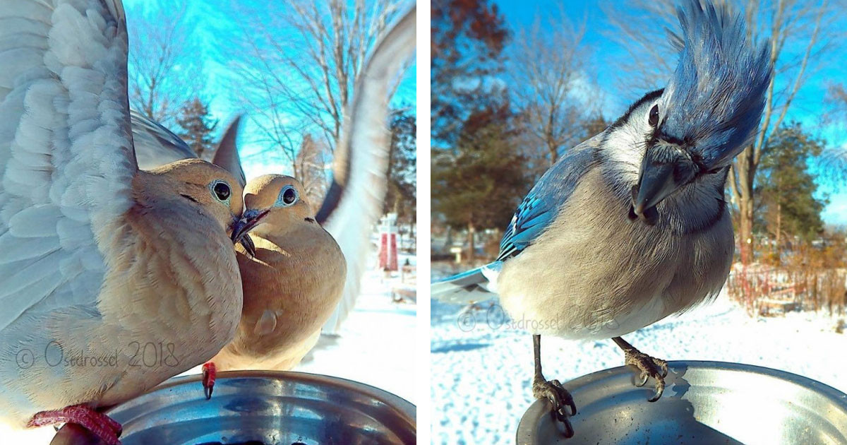 This Woman Setup A Photobooth For Birds In Her Backyard And The Results Are Beautiful