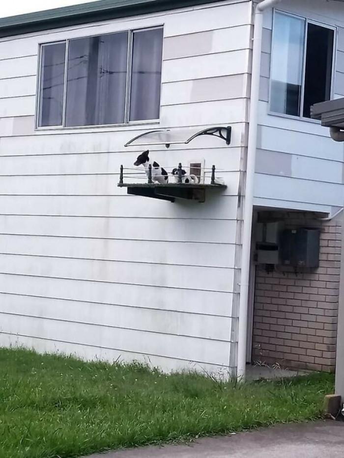 9. Tiny doggo balcony