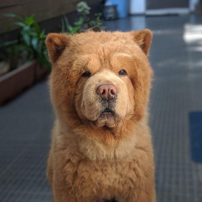 #65 Teddy bear.