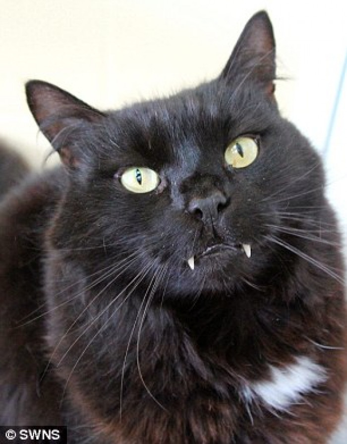 Re-homing black cats has always been difficult thanks to myths and superstition, which makes people think that they will bring them bad luck